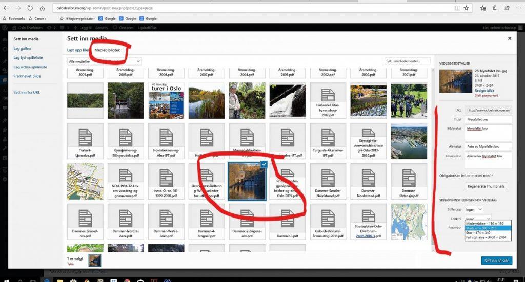 Sette inn bilde fra mediebibliotek i WordPress
